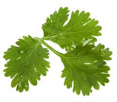 Coriander Leaves and Kidneys (3/6)