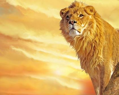 Lion - 02