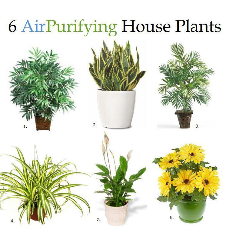 6 Air Purifyng House Plants Impressions