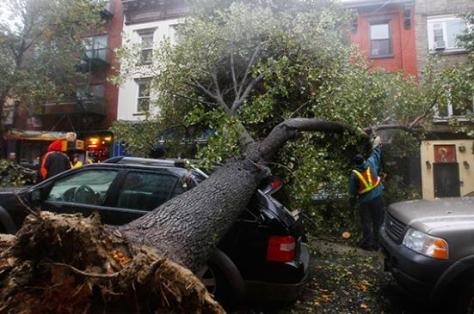 Fallen tree on top of a car in Hoboken, New Jersey