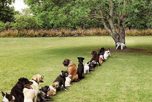 Problem caused by DEFORESTATION - 4