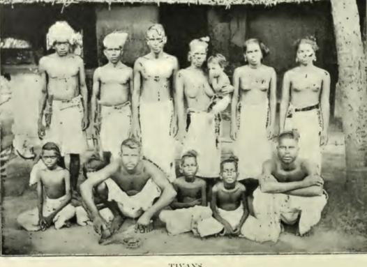 Tiya tribe - 1