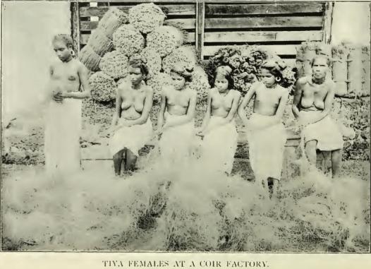 Tiya tribe - 2