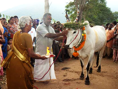 Maattu Pongal (Source - tamilrasigan.wordpress.com)