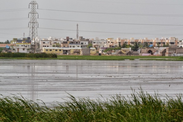City in the background of Pallikaranai wetland (Photo:  anidiotstraveldiaries.blogspot.in)