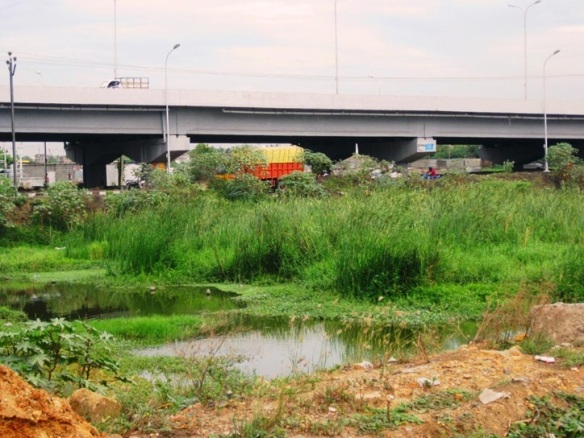 One of the flyovers constructed  in the midst of the marshland (Photo credit: N. Lalitha and C.R .Sivapradha)