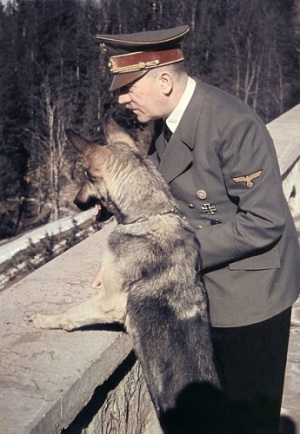 Hitler With his Alsatian Dog, Blondi.