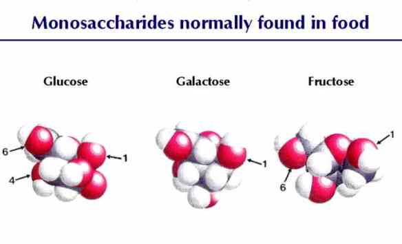 Monosaccharides normally found in food (Source: socialphy.com)