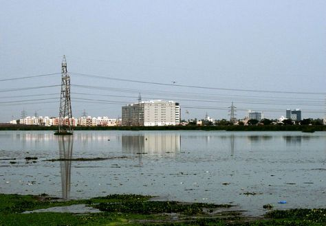 Pallikaranai marsh (Photo: Simply CVR)