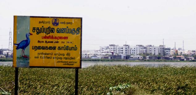 Pallikaranai marsh, which was once a scenic wetland has lost its charm, mainly on account of rapid urbanisation. (Photo:  M. Karunakaran)