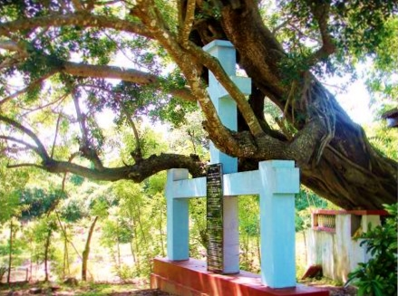 The Palu tree at Maha Galgamuwa. It is under the shade of this tree that Joseph Vaz ministered to the villagers.  (Source: ceylontoday.lk)