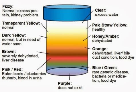 Color of urine (Source: kasperka.co.za)