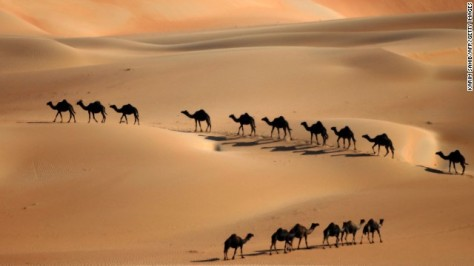 Camels (Source: religion.blogs.cnn.com)