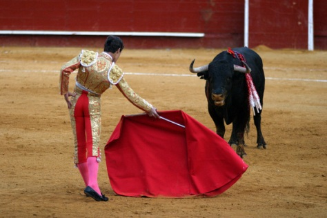 A matador gets a bull's attention by waving his muleta. (Credit: Bull Fighter via Shutterstock)
