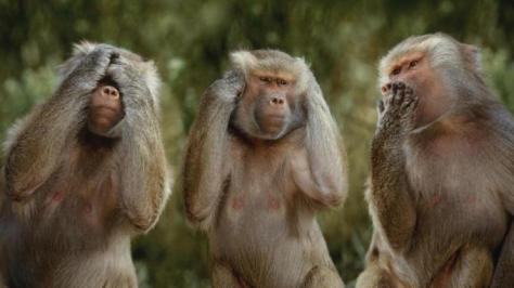 The 3 Monkeys of Mahatma Gandhi (Source: daililol.com)